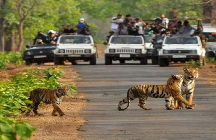 jangal safari in dehradun